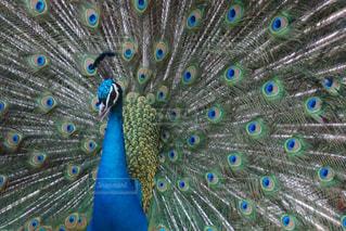 テーブルの上に立っているカラフルな鳥の写真・画像素材[2100237]