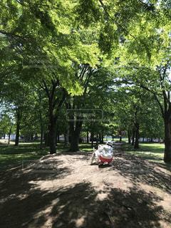 犬,公園,森林,屋外,散歩,樹木,地面,草木,ウエスティ
