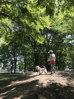 木の上に乗っている男の写真・画像素材[2262623]