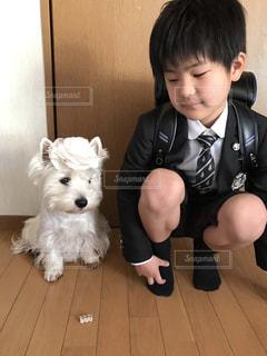 白い犬の前に立っている小さな男の子の写真・画像素材[2708261]