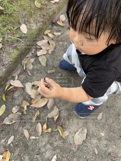 地面に落ちていたどんぐりを手に掴む男の子の写真・画像素材[4919559]