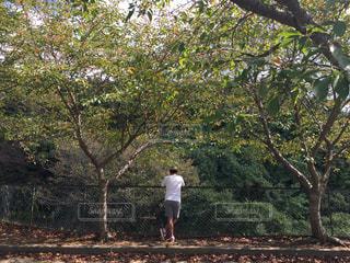 木の隣に立っている人の写真・画像素材[800133]