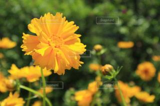 近くの花のアップの写真・画像素材[1411178]