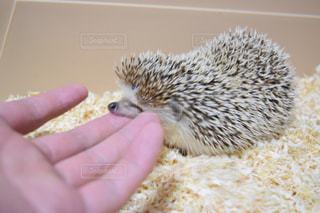 動物を持っている手の写真・画像素材[721245]