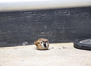 地面に横たわって動物の写真・画像素材[872777]