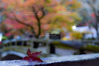 秋色の写真・画像素材[876521]