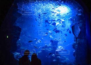 水族館デートの写真・画像素材[907799]