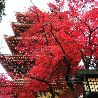 紅葉と五重塔の写真・画像素材[1212897]