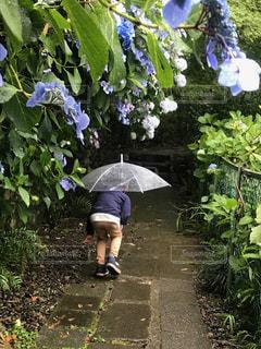 傘,紫陽花,梅雨,小径