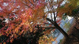 大きな木 - No.856575