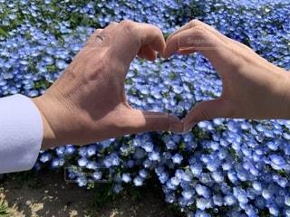 恋人,花,カップル,花畑,ハート,ネモフィラ,ひたち海浜公園,茨城,マーク