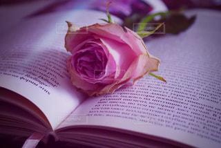 薔薇のある風景の写真・画像素材[1818455]