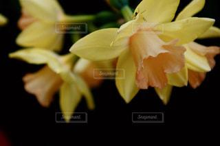 花,春,黄色,幸せ,イエロー