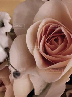花,バラ,薔薇,ベージュ,ミルクティー色