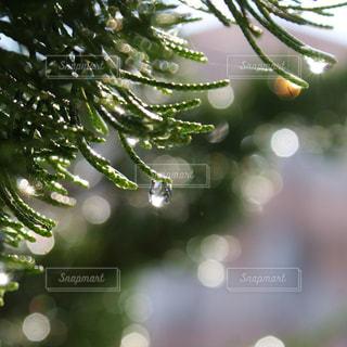 雨あがりに きらりんの写真・画像素材[2138266]