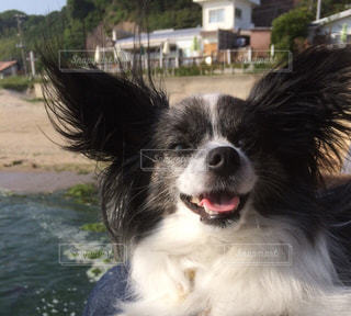 水の中に座っている犬の写真・画像素材[721318]