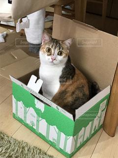 ボックスに座って猫の写真・画像素材[721701]