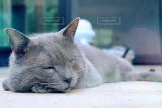 近くに猫のアップの写真・画像素材[1284994]
