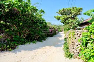 屋外,晴天,沖縄