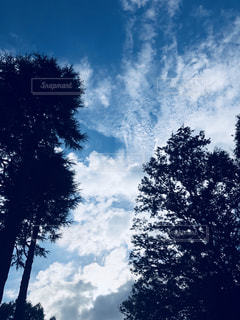空,雲,晴れ,青空,秋空