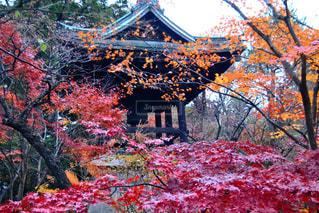 平林寺の紅葉の写真・画像素材[841725]