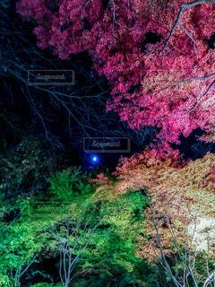 緑の葉とピンクの花のグループの写真・画像素材[894144]