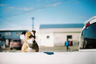 ビーチに座っている犬の写真・画像素材[726179]