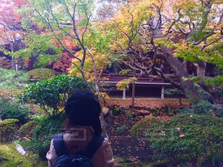 木に座る人の写真・画像素材[875007]