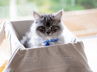 子猫の写真・画像素材[2301574]