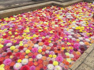 水に浮かぶ花たちの写真・画像素材[813682]