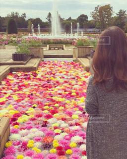 カラフルな花と噴水の写真・画像素材[813686]