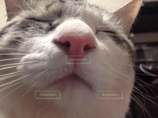 猫の写真・画像素材[20845]