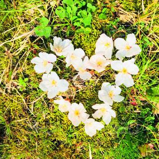 ハート💕  桜  お花  花びら