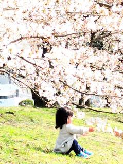 京都の桜🌸と女の子の写真・画像素材[1122644]