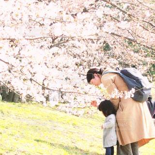 お母さん  ママ  親子  母  娘  お散歩  桜  花見  仲良し  女性  女子自然