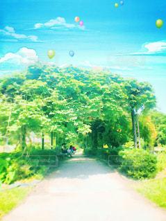 青空の下の緑のトンネルの写真・画像素材[1312590]
