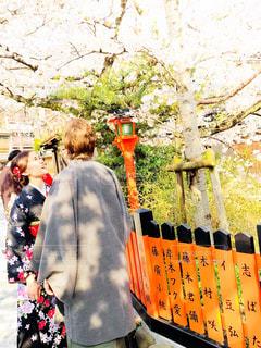 桜とカップル🌸の写真・画像素材[1584158]
