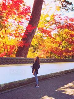 紅葉🍁し始めた木々達の写真・画像素材[1598092]
