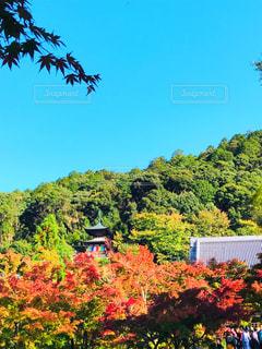 紅葉とお寺🍁の写真・画像素材[1611508]