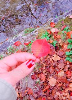 風に舞い散る紅葉の写真・画像素材[1620389]