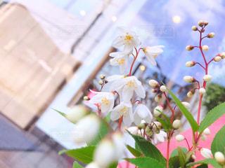小さなお花が可愛い💕の写真・画像素材[1884989]