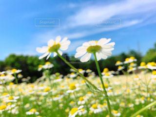 可愛いお花畑の写真・画像素材[2140628]