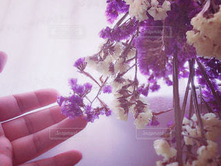 紫と黄色の鮮やかな花の写真・画像素材[2140660]