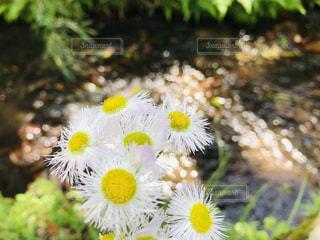 可愛いお花と小川のせせらぎの写真・画像素材[2140842]
