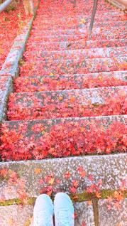 紅葉と石段の写真・画像素材[2146825]