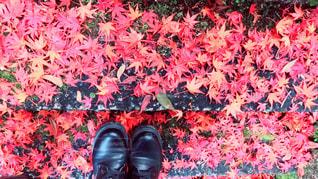 紅葉と石段の写真・画像素材[2146841]