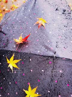 色とりどりの花のグループの写真・画像素材[2180546]