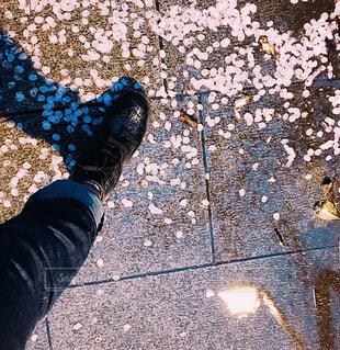 花びらと水たまりの写真・画像素材[2210988]
