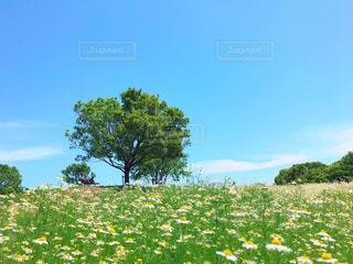 自然,風景,空,花,屋外,晴れ,景色,草,丘,樹木,新緑,お散歩,草木,日中,お天気,フォトジェニック,晴れた日のお散歩