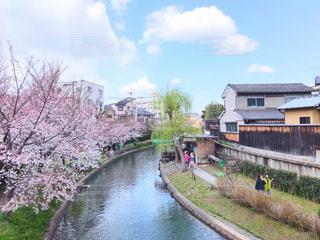 自然,風景,空,建物,花,桜,屋外,京都,晴れ,川,水面,景色,草,樹木,町,酒蔵,運河,日中,お天気,フォトジェニック,お散歩道,伏見桃山,晴れた日のお散歩